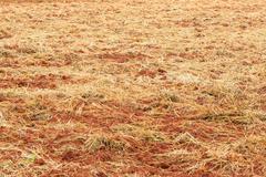Soil preparation for planting Stock Photos
