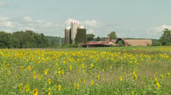 Sunflower Field and Farm 1 Stock Footage