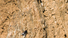 Fly macro on the stone. Shot to RAW, wide dynamic range Stock Footage