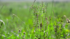 Green field of grass macro. Shot to RAW, wide dynamic range Stock Footage