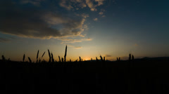 Wheat field at sunset. Shot to RAW, wide dynamic range Stock Footage