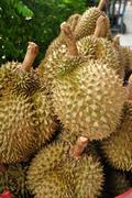 King of fruit fresh durians  in market at Thailand - stock photo