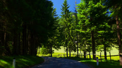 POV. Driving through alpine forest, Austria. Stock Footage