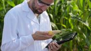 Stock Video Footage of Male scientist with tablet examine corn HD