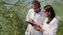 Scientists examine tomato plant in greenhouse HD Stock Footage