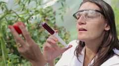 Female scientist inject substance into tomato HD Stock Footage