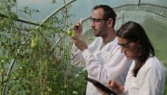 Scientists in greenhouse inject substance into tomato HD Stock Footage