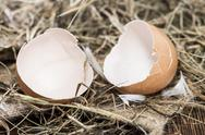 Stock Photo of eggshells