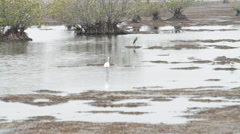 BIRDS IN SWAMP Stock Footage
