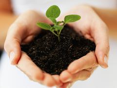 Hands holding sapling - stock photo