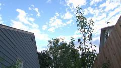 Birds Flying Around Neighborhood Houses - stock footage