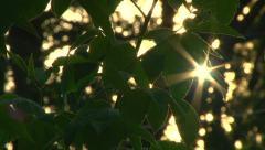 Glowing Sun Through Tree Leaves 1 Stock Footage