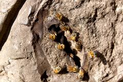 bee hive entrance - stock photo