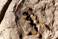 Bee hive entrance Stock Photos