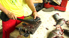 Processing of fish in the market in Maceio Alagoas, Brazil Stock Footage