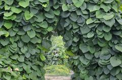 green archway in a garden. - stock photo