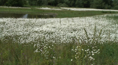 Daisy Fobney nature reserve 08 Stock Footage