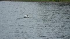 Swan Fobney 02 Stock Footage