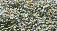 Daisy Fobney nature reserve 07 Stock Footage