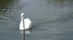 Swan Fobney 05 Stock Footage