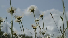 Daisy Fobney nature reserve 04 Stock Footage