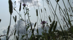 Grass & Flowers Close Fobney nature reserve Stock Footage