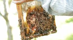 Beekeeper working with bee honeycomb, agriculture beekeeping Stock Footage