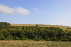 Yorkshire wolds woods Stock Photos