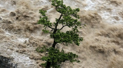 Lone tree swollen flooded river, Alberta, Canada - stock footage