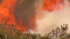 Brush Fire w/ Large Flames - stock footage