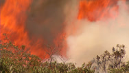 Stock Video Footage of Brush Fire w/ Large Flames