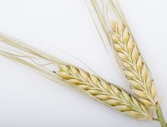 Wheat bundle Stock Photos