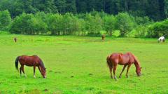 Grazing horses. Stock Footage