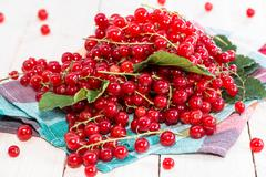 red currants (macro shot) - stock photo
