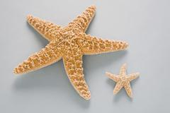 Two contrasting starfish - stock photo