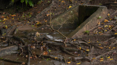 Storm rain water comming our of drain pipe Stock Footage