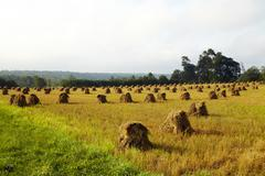 USA, New York State, Field with haystacks - stock photo