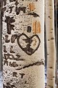 Close-up of aspen tree trunk with carved heart Stock Photos