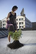 Woman watering aspen sapling on rooftop Stock Photos