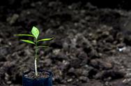 Sprout for planting at the farm Stock Photos