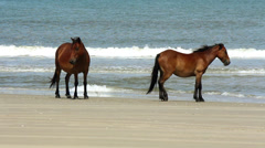 Two wild horses by the sea Stock Footage