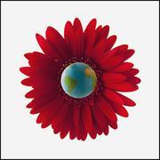 Globe in center of red gerbera daisy Stock Photos