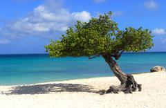 Divi divi tree on eagle beach in aruba Stock Photos