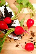 Freshly dug radishes Stock Photos