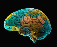 Composition of human brain model and world map Stock Illustration