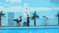 Seal on show at the dolphinarium Stock Footage