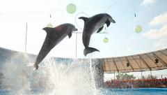 Dolphins jump on show at the dolphinarium Stock Footage