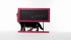 Stock Video Footage of Free kitten sign
