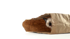 Kitten in paper bag Stock Footage