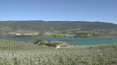 Agriculture, apple blossoms and lake, fruit orchards cover much of the Okanagan Stock Footage